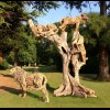 THE TREE CLIMBING LIONS OF LAKE MANYARA
