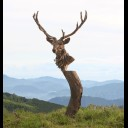 EMPORER STAG BUST ON PLINTH
